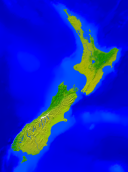 New Zealand Vegetation 1183x1600